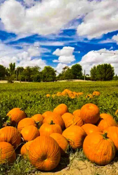 Pumpkin & Chili Party